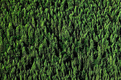 Carpet Of Trees Print by Todd Klassy