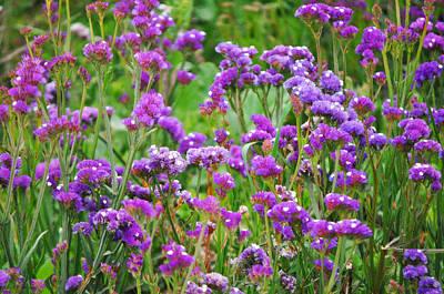 Carpinteria Central Coast Wildflowers Original by Kyle Hanson