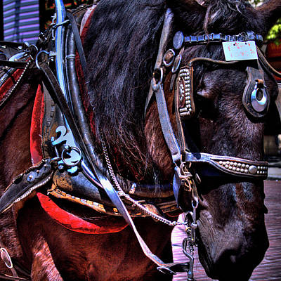 Carriage Horse Print by David Patterson