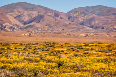 Carrizo Plain And Two Hills Print by Marc Crumpler
