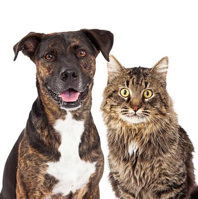 Cat And Dog Closeup Print by Susan  Schmitz