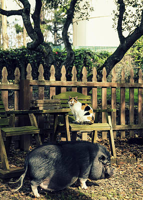 Cat And Pig  Print by Kate Verna Photography