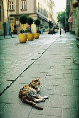 Cat Print by Anton Popov
