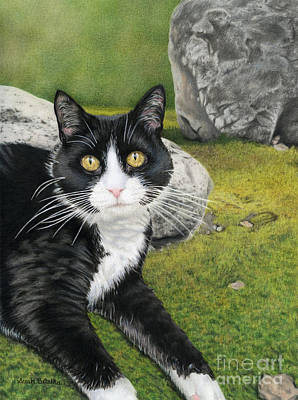 Color Pencil Drawing - Cat In A Rock Garden by Sarah Batalka