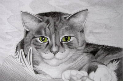 Moggy Drawing - Cat In The Cupboard by Karen Wood