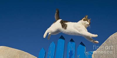 Cat Jumping A Gate Print by Jean-Louis Klein & Marie-Luce Hubert