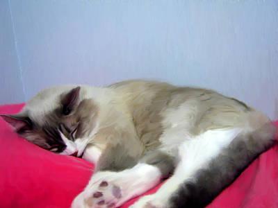 Pink Digital Art - Cat Nap by Ruth Moratz