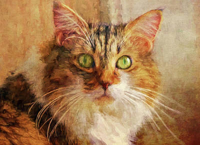 Gray Tabby Photograph - Cat Portrait - Pretty Girl by HH Photography of Florida