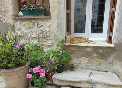 Cat Relaxing In St Paul De Vence Print by Marilyn Dunlap