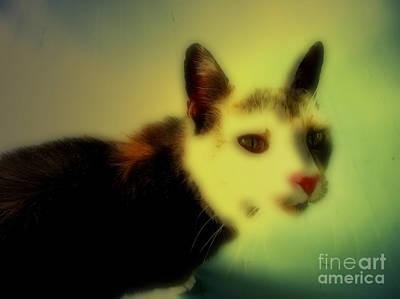 Cat Print by Steven  Digman