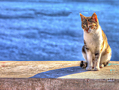 Cat Watch Original by Eleni Mac Synodinos