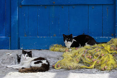 Cats With A Fishing Net Print by Jean-Louis Klein & Marie-Luce Hubert