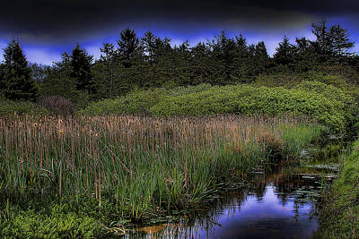 Cattails Photograph - Cattails By The Creek by David Patterson