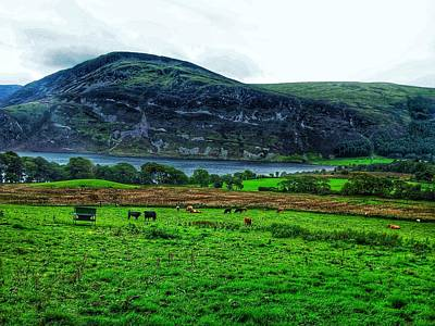 Cattle Grazing At Buttermere Print by Joan-Violet Stretch