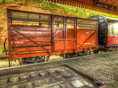 Cattle Wagon Print by Catchavista