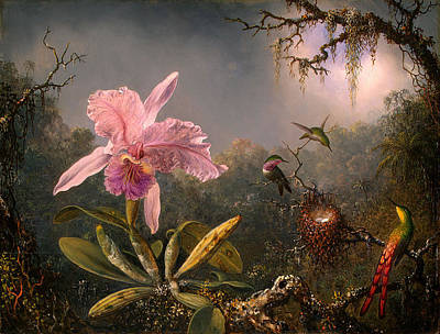Cattleya Orchid And Three Hummingbirds Print by