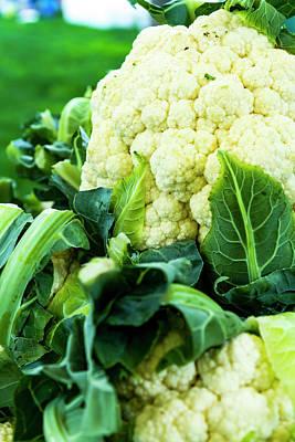 Locally Grown Photograph - Cauliflower Head by Teri Virbickis