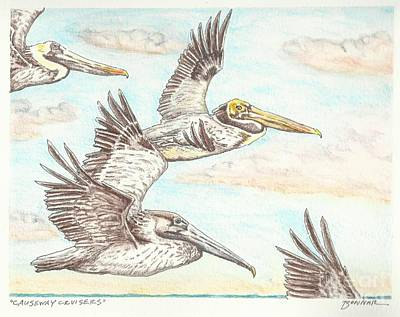 Pelican Drawing - Causeway Cruisers by Sue Bonnar