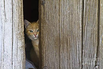 Mammals Photograph - Cautious Kitty by Heiko Koehrer-Wagner