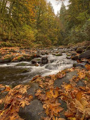 Mill In Woods Photograph - Cedar Creek by Jean Noren