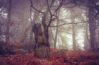 Photograph - Celtic Guardian by Jenny Rainbow
