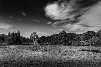 Dragon Fly Photograph - Center Cypress - Bw by Marvin Spates
