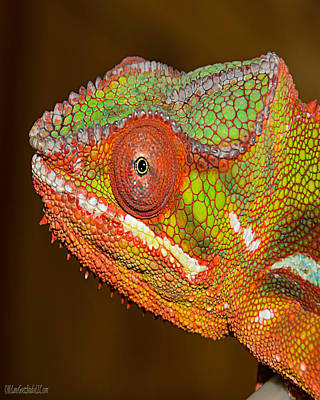 Lizard Photograph - Chameleon Nature Wear by LeeAnn McLaneGoetz McLaneGoetzStudioLLCcom
