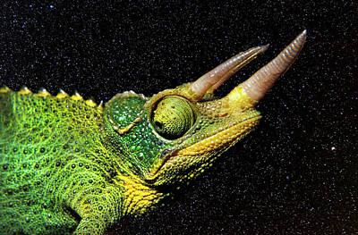 Chameleon Photograph - Chameleon Night by Sean Davey