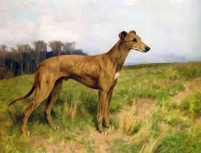 Greyhounds Painting - Champion Greyhound Dee Flint by Arthur Wardle