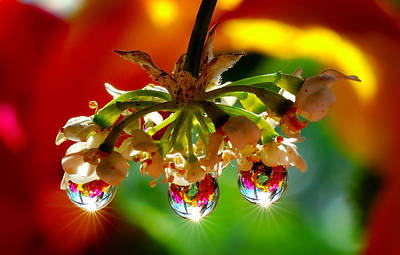 Natures Wonderful Colors Digital Art - Chandelier From The Rain Drops by Yuri Hope