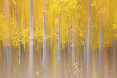 Changing Seasons Print by Darren White