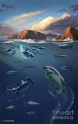 Channel Islands Sharks Print by Jim Dowdalls