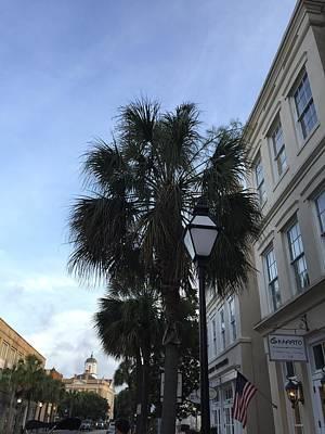 Photograph - Charleston Palm by C F  Legette