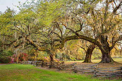 Charleston South Carolina Live Oaks Alongsplit Rail Fence Magnolia Plantation Print by Bill Swindaman