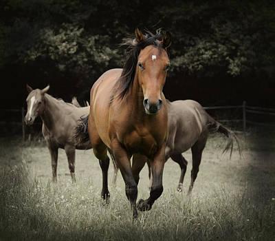 Quarter Horse Digital Art - Charlie And Friends by Jana Goode