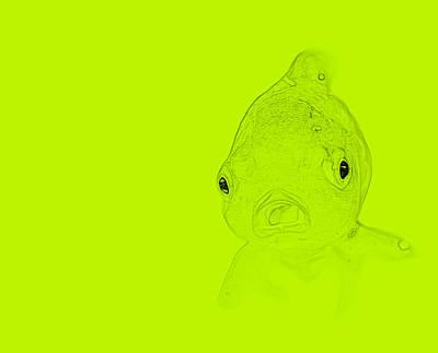 Schizzo Photograph - Chartreuse Fish by  Judy Bernier