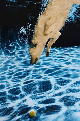 Diving Dog Photograph - Chase 2 by Jill Reger