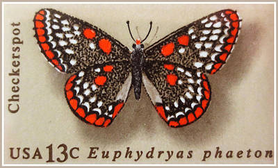 Checkerspot Butterfly Print by Lanjee Chee