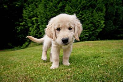 Cheeky Pup Print by Richard Downs