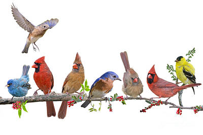 Cheerful Songbird Congregation Print by Bonnie Barry