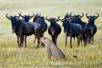 White Beard Photograph - Cheetah Acinonyx Jubatus With Blue by Panoramic Images