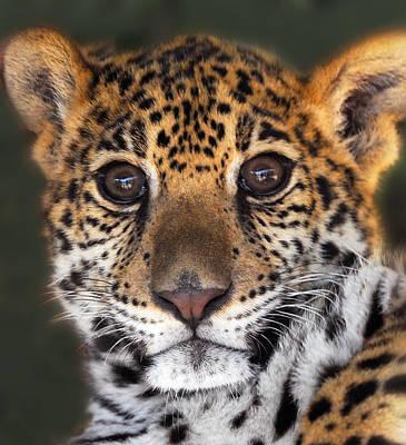 Cheetah Print by Craig Incardone