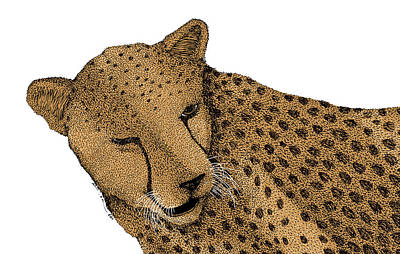 Cheetah Drawing - Cheetah by Karl Addison