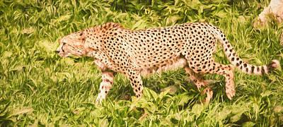 Cheetah Mixed Media - Cheetah On The Hunt by Pati Photography