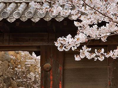 Cherry Blossoms Print by Joe Bonita