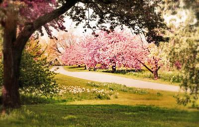 Daffodils Digital Art - Cherry Hill Grove by Jessica Jenney