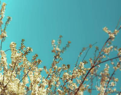 Photograph - Cherry Tree Blossoms by Sonja Quintero