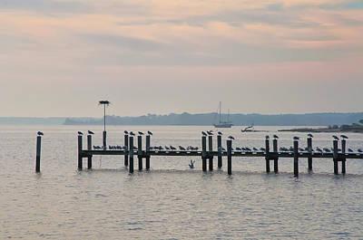 Seagull Digital Art - Chesapeake Seagulls by Bill Cannon