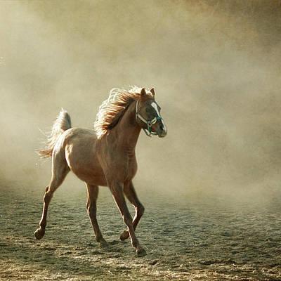 Arabians Photograph - Chestnut Arabian Horse by Christiana Stawski