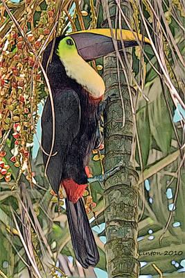 Toucan Digital Art - Chestnut-billed Toucan by Larry Linton